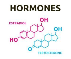 Эстрадиол и тестостерон