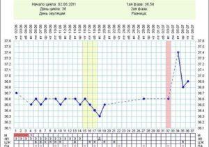 При цикле 32-36 дней на какой день ожидать овуляцию?