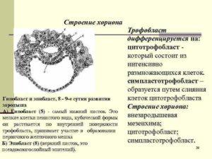 Изменение структуры хориона