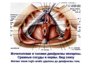 Боль между анусом и влагалищем
