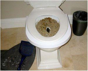 Часто ходит в туалет по большому