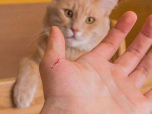 Оцарапал до крови уличный кот