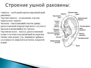 Ножки завитка внешнего уха, боль при пальпации