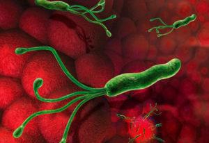 Бактерия Хеликобактер
