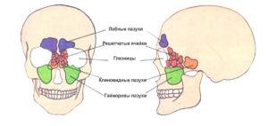Пневматизация придаточных пазух носа и ячеек височных костей