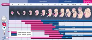 Как узнать в какой месяц я забеременела?
