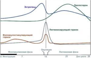 Уровень эстрогена и прогестерона