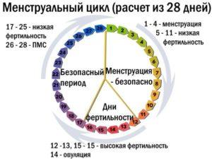Как рассчитать цикл при приеме ок