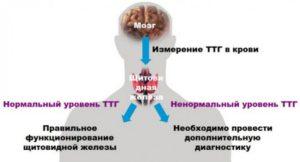 Повышен ТТГ, эмоциональная лабильность, набор веса