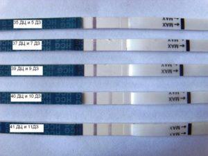 Задержка месячных, тест отрицательный. 42 день цикла