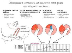 Задержка менструального цикла после отмены Мидианы