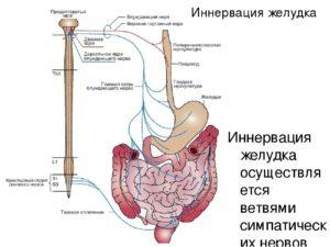 ЖКТ и нервы