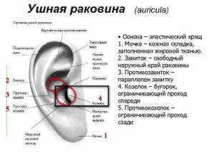 Болит ушная раковина