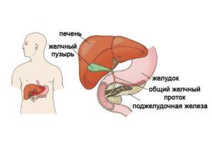 Увеличенная печень и поджелудочная железа