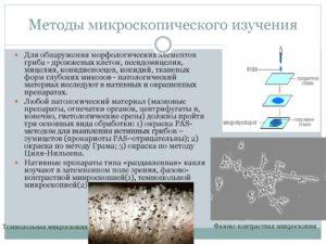Элементы патологического гриба