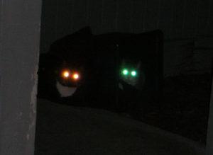 У ребенка в темноте красным цветом светятся глаза