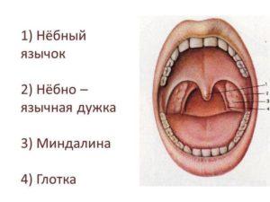 Опухоль нёбного язычка