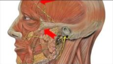 Болит голова и дергаются мышцы лица