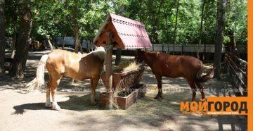 Укусила лошадь в зоопарке