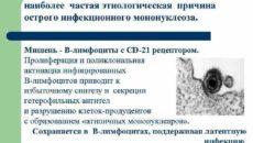 Вирус эпштейна барра и прививка от кори