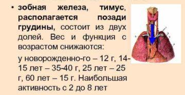 Вилочковая железа, расчёт объема и массы тимуса